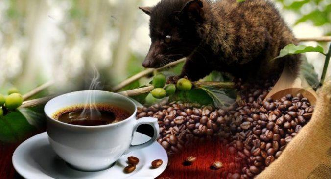 coffeeplantation-luwakcoffee-701x380