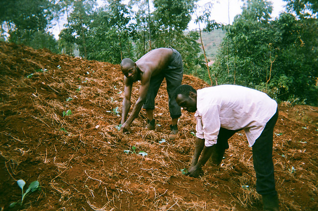 Uganda weeding